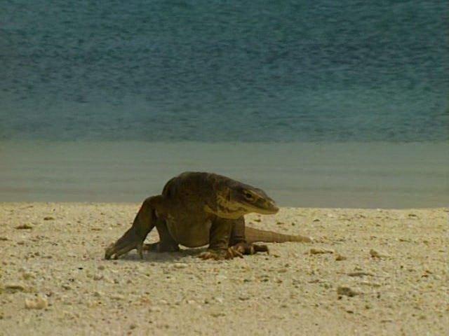 Остров Ящериц, Австралия