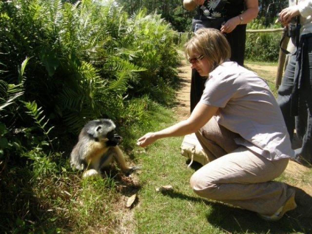 Джунгли Мадагаскара