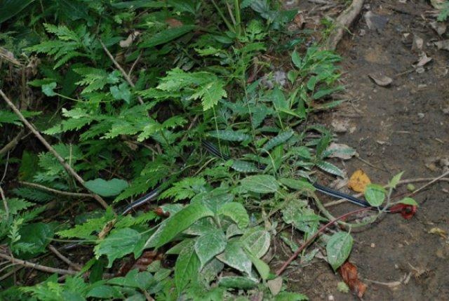 Треккинг по джунглям, Борнео, Малайзия