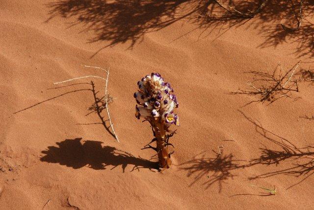 Пустыня Сахара, Алжир