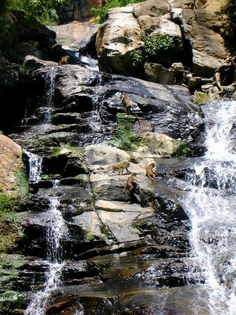 Водопад Бэйкера в самом высокогорном национальном парке Плато Хортона, Шри-Ланка
