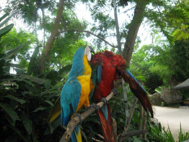 Балийский сафари-парк