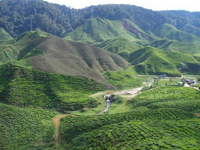 Чайная плантация Boh Plantations, Малайзия