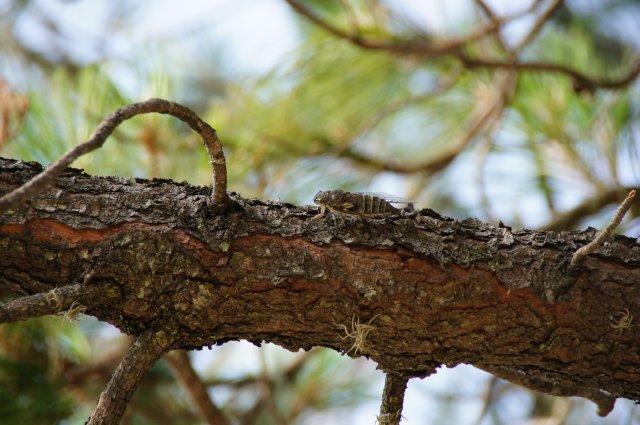 Жуки в Монте-Альбане, Мексика
