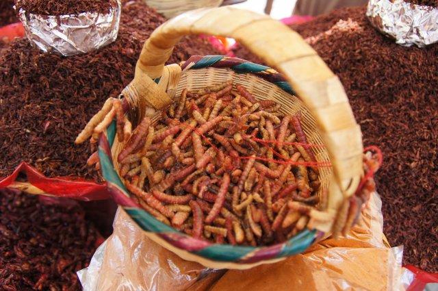 Гусеницы - мексиканский деликатес, Оахака