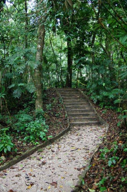 Лесная тропинка в Паленке, Мексика