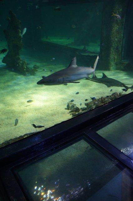 Аквариум в Сиднее, Австралия