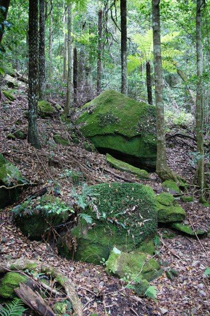 Австралийский лес
