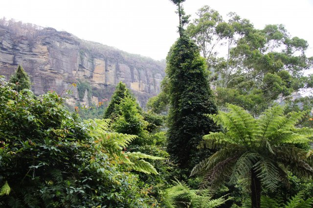 Прогулка по лесу, Австралия