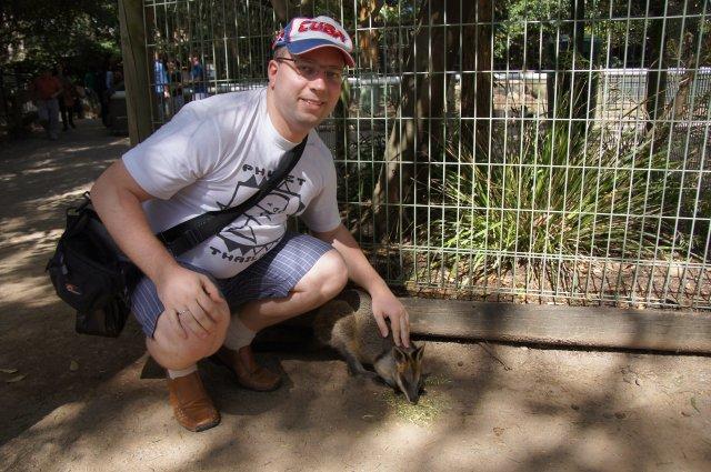 Валлаби - очень похожее на кенгуру сумчатое, Австралия
