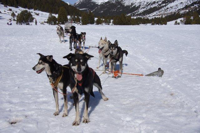 Катание на собачьих упряжках, Грау Роч, Андорра