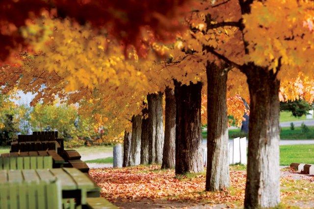 Осень в Брунсвике, Канада
