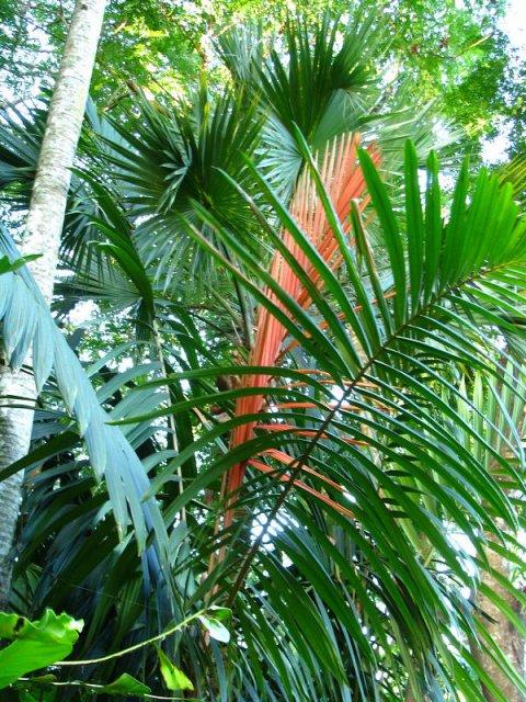 Ботанический сад Flecker в Кэрнсе, Австралия