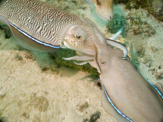 Подводный мир ОАЭ