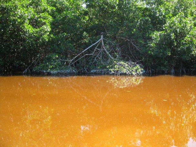 Селестун мангровый заказник, Мексика