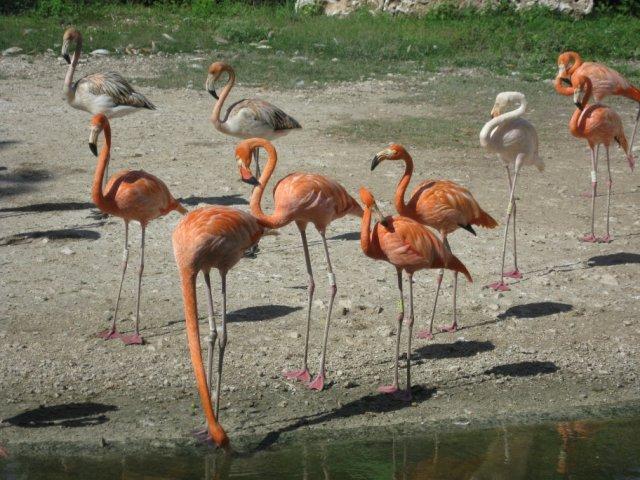 Парк развлечений Шкарет, Мексика