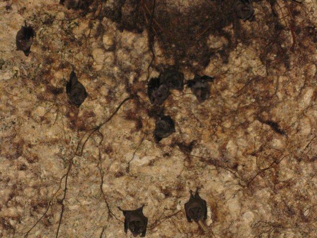 """Летучие мыши в сеноте """"7 Bocas"""", Мексика"""