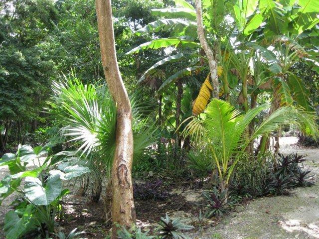 """Перед входом в сенот """"7 Bocas"""", Мексика"""