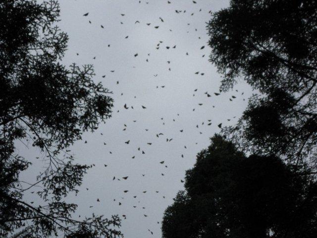 Заповедник бабочек монархов, Мексика