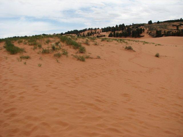 Розовые Песчаные Дюны (Coral Pink Sand Dune), Юта