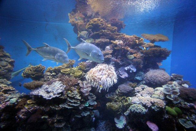Обитатели Красного моря в аквариуме Эйлата, Израиль