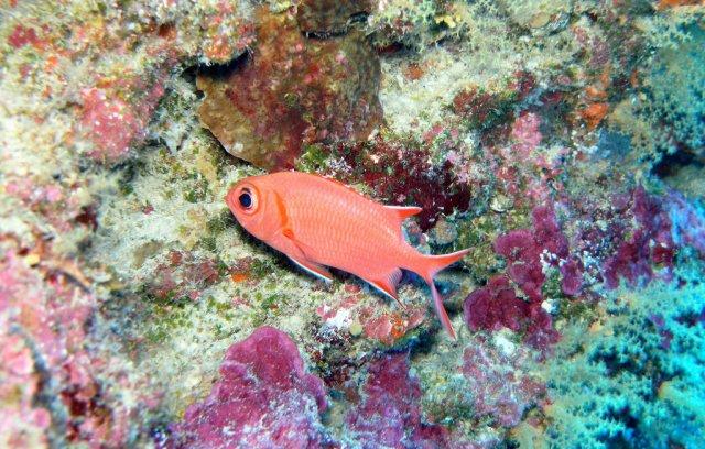 Подводный мир, остров Лабуан, Малайзия