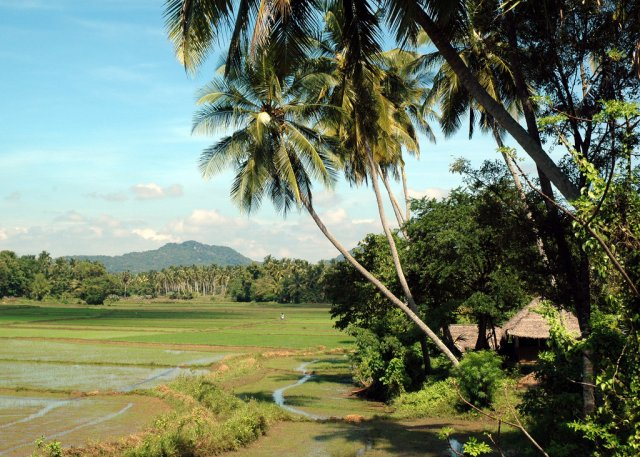 Ландшафт Курунегала, Шри-Ланка