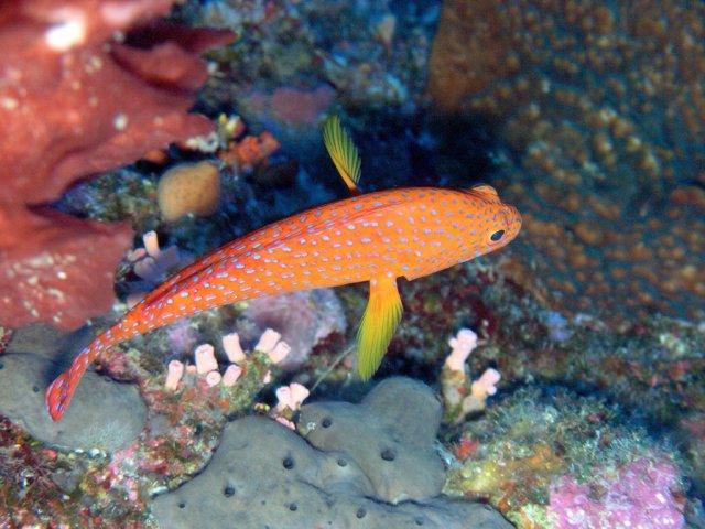 Подводный мир острова Лаянг-Лаянг, Малайзия