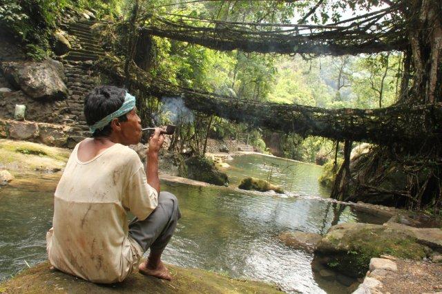 Живые мосты из корней фикуса, деревня Nongriat, Индия