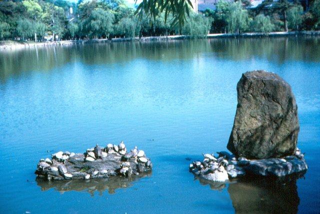 Черепашки в парке Нара, Япония