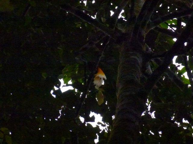 то вам не в птичьем парке Сингапура. Нам очень повезло