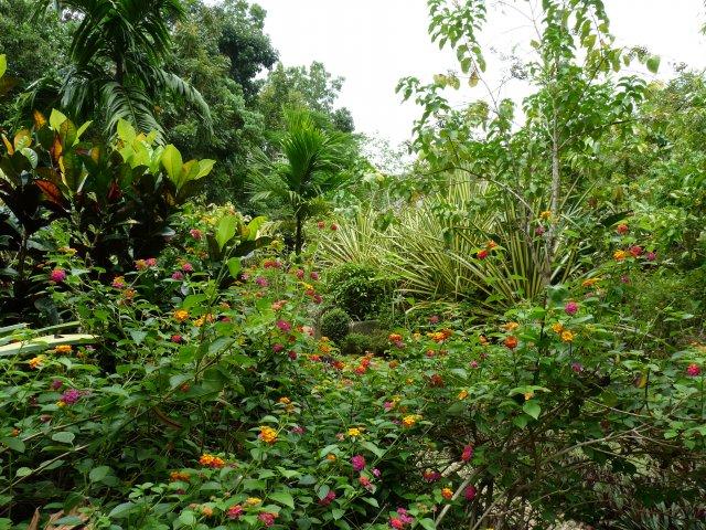 парк Бабочек (Batterfly Garden), Бохол, Филиппины