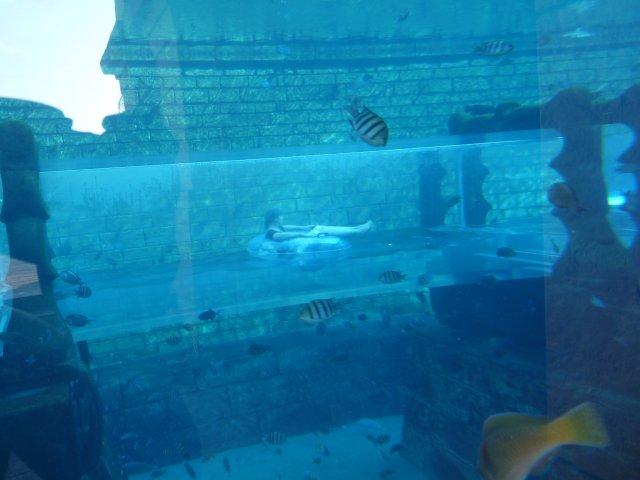Аттракцион Shark Attack в аквапарке Aquaventure, Дубай