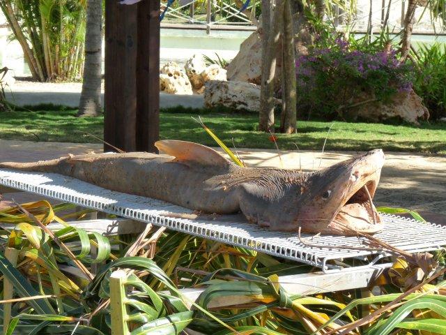 приготовление блюда из акулы, Sandals Royal Hicacos 5*, Варадеро