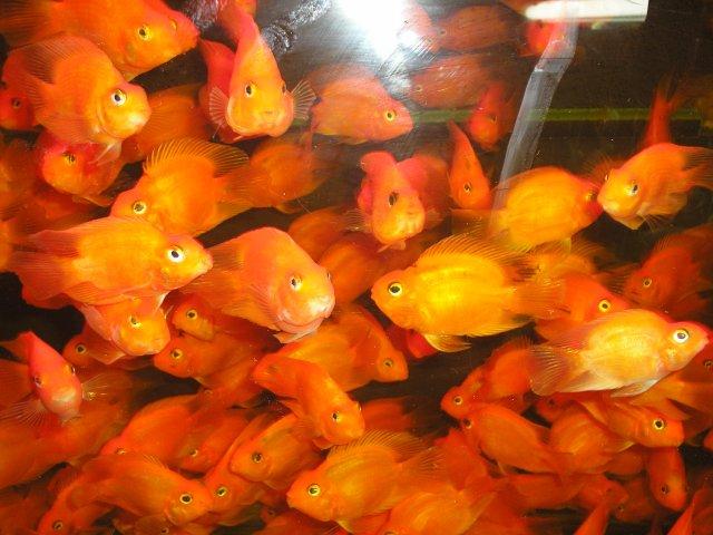 Птичий рынок в Шанхае