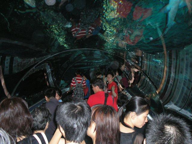 Океанариум в Шанхае