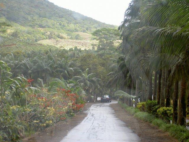 Дорога в Шамарель среди буйной растительности, Маврикий