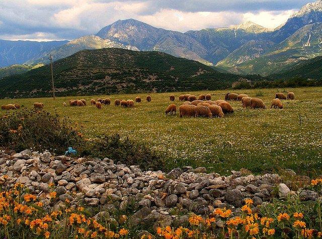 Пастбища, Албания