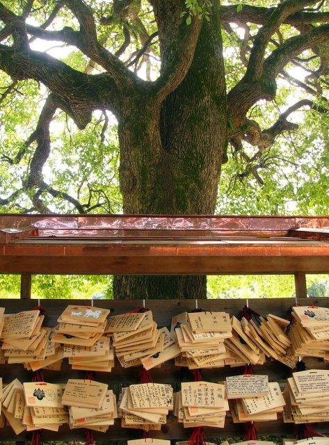 Таблички с желаниями в парке, Япония