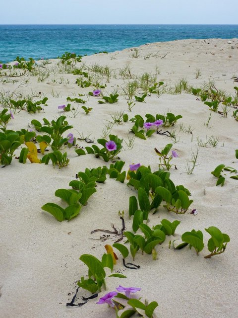 Пляж кубинского города Санта-Мария-дель-Мар