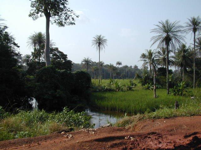 Сьерра-Леоне, Африка