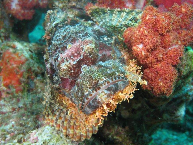 Подводный мир Симиланских островов, Таиланд