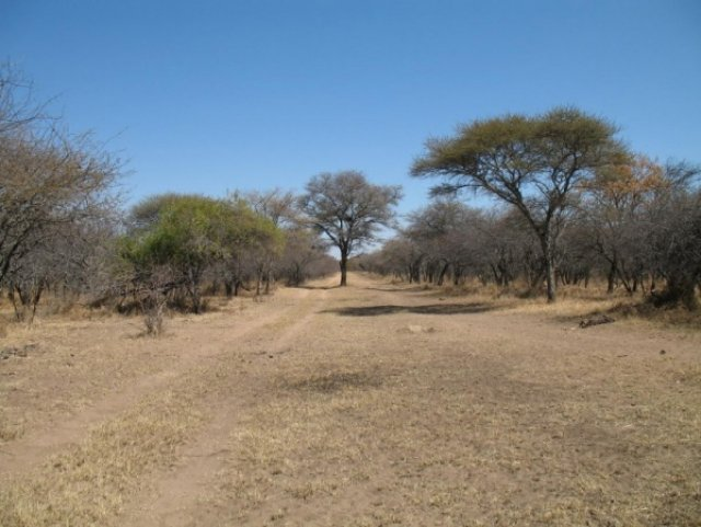 Африканский буш