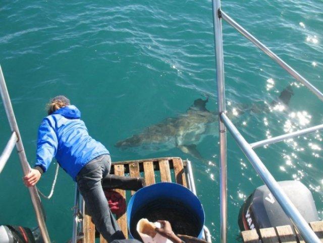 Ловит акулу за нос своим протезом