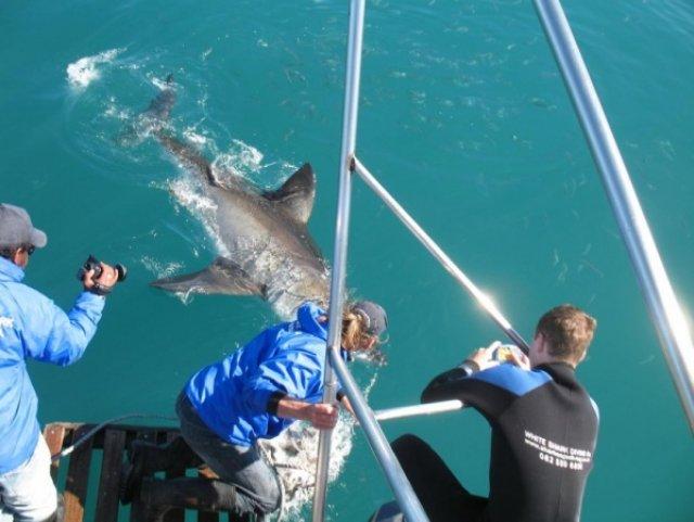 Ловит акулу за нос своим протезом (2)