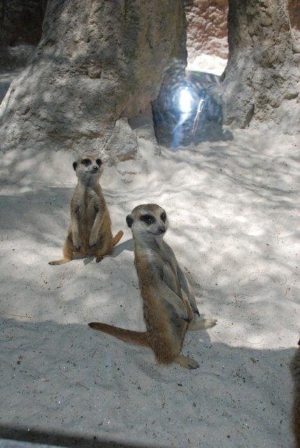 Зоопарк в Фуэнхиролле, Испания
