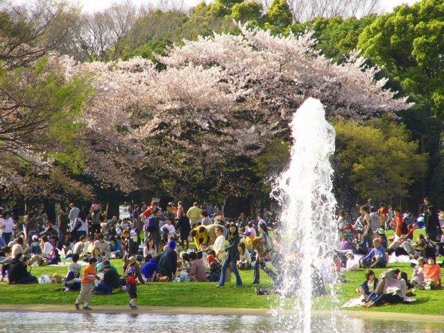Парк Йойоги в воскресение, Токио, Япония