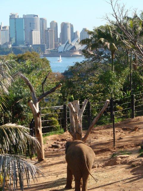 Зоопарк Тагонга, Сидней, Австралия