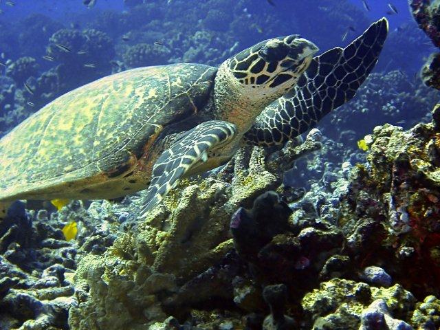 Подводный мир Туамоту, Французская Полинезия