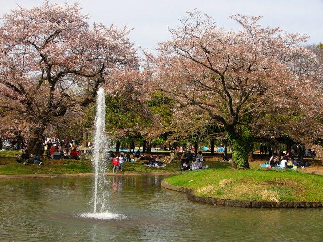 Парк Йойоги в Токио, Япония